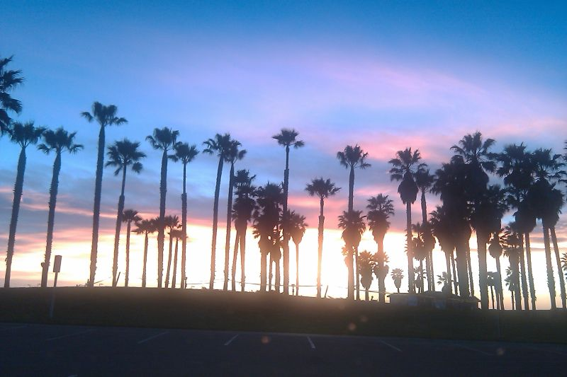 Palm trees at beach during sunset